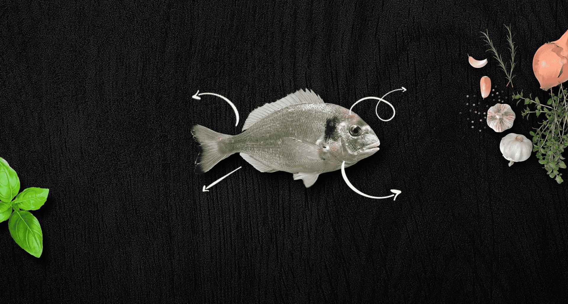 דג דניס