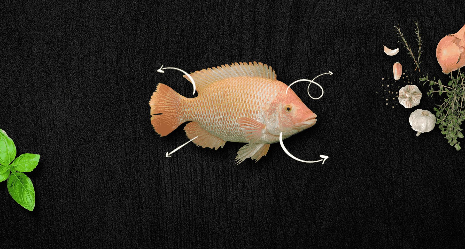 דג אדמונית